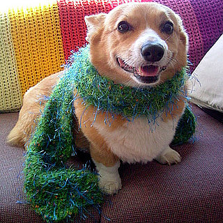 Will Your Furry Friend Take Part in Dress Up Your Pets Day?