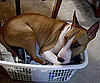 Pet Pic of the Day: It's Laundry Day