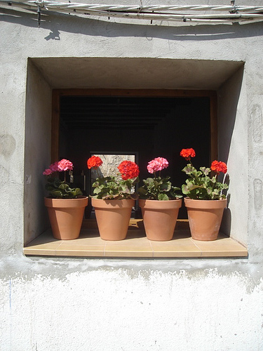 If you live in a temperate climate, potted geraniums can live outside your front door year round. Mix pinks and reds for great pops of color. Source:  Flickr User slow Spain