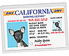 Dog Barking License Photo ID Wallet Card: Spoiled Sweet or Spoiled Rotten?