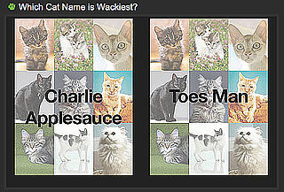 Choose the Crazier Cat Name For a Chance to Win!
