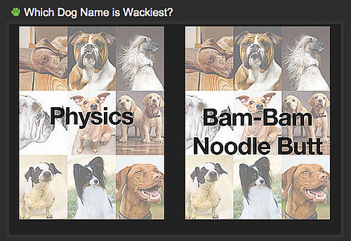 Can You Tell Which Dog Name Is Wackiest For a Shot at $1,000?