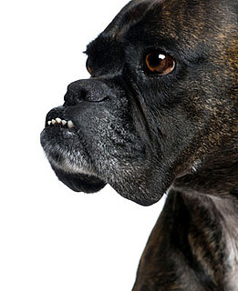 Are You in Dental Denial About Your Dog?: In the LINK of an Eye