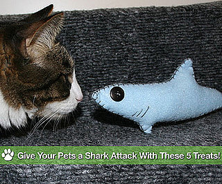 Shark Themed Gear For Pets