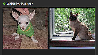 Which Pet Is Cuter Game