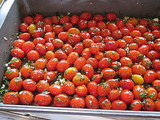 Roasted Tomatoes With Herbs Recipe 2010-04-09 16:05:24