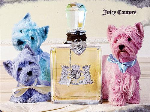 Juicy Wallpaper 3 westies puppies