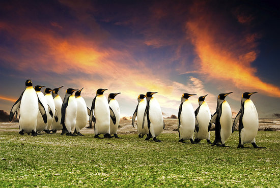 Learn About All the Penguins of the World For Happy World Penguin Day