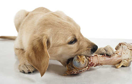 Bones Are Bad For Dogs