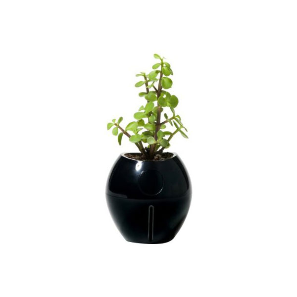 Grobal Self-Watering Plant ($15)