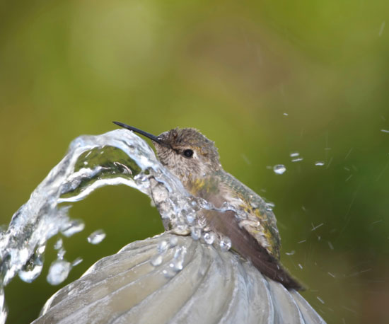 Fill Up a Bird Bath