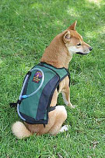 Hydration Vest For Hiking Dogs
