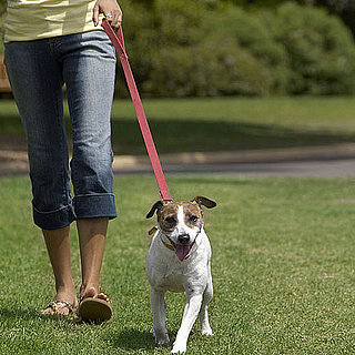 How Often Should I Walk My Dog