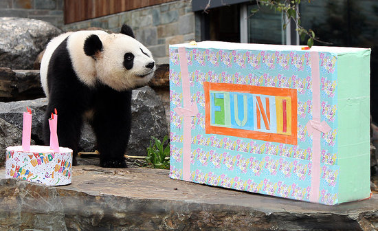 Happy Fourth Birthday, Funi!