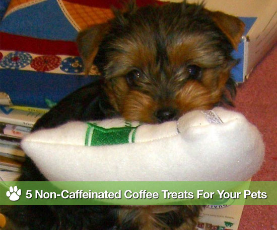 5 Non-Caffeinated Coffee Treats For Your Furry and Feathered Friends!