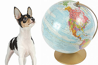 Share Birthplaces For Pets Here