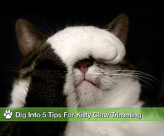 How to Trim My Cat's Claws