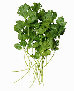 The Benefits of Eating Cilantro