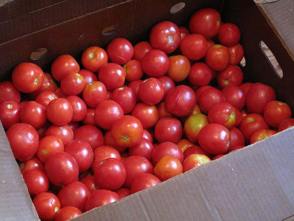 Start with fresh, unblemished tomatoes.