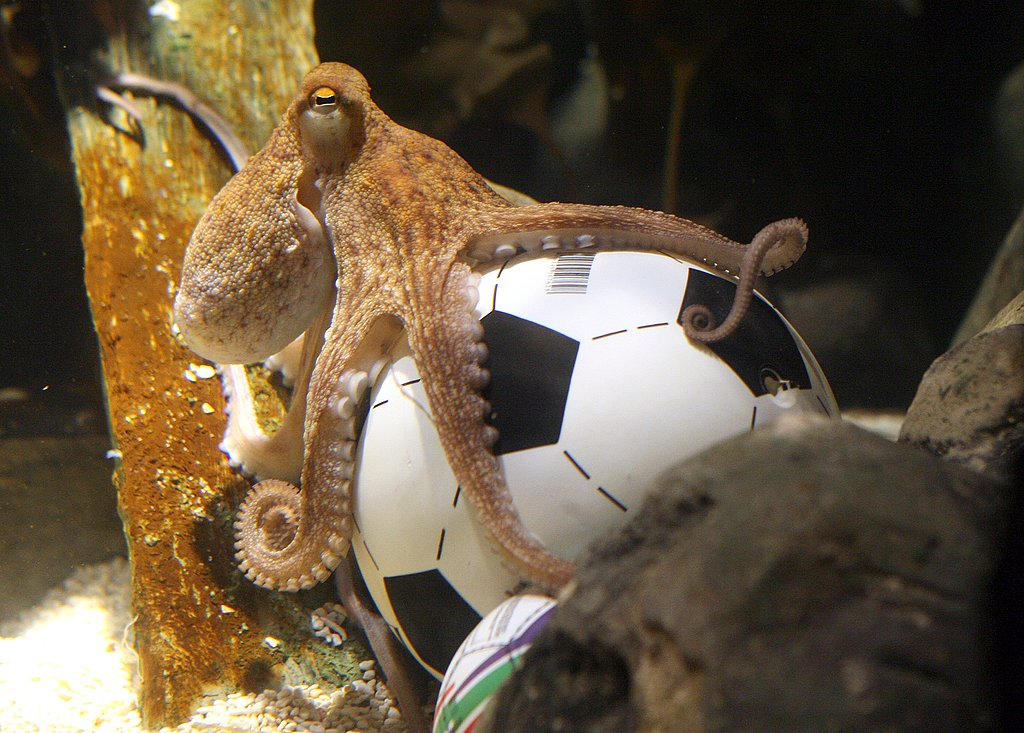 RIP, Paul the Score-Predicting, Soccer Loving Octopus