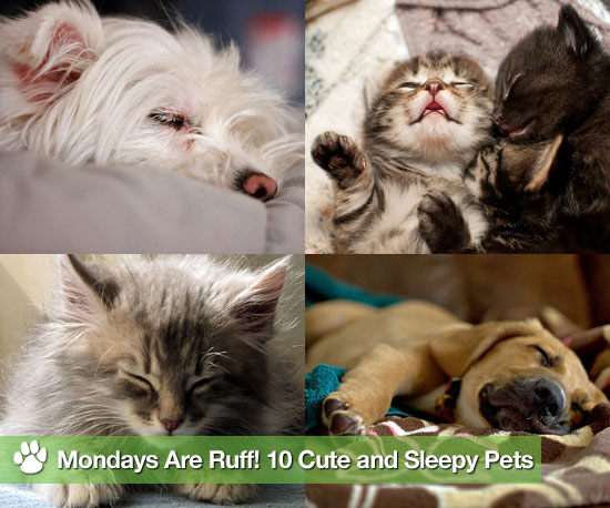 Mondays Are Ruff! 10 Cute and Sleepy Pets