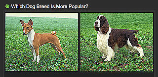 What's the Most Popular Dog Breed?