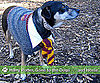Pictures of Pets Dressed Up as Harry Potter For Harry Potter and the Deathly Hallows, J.K. Rowling&#039;s Book