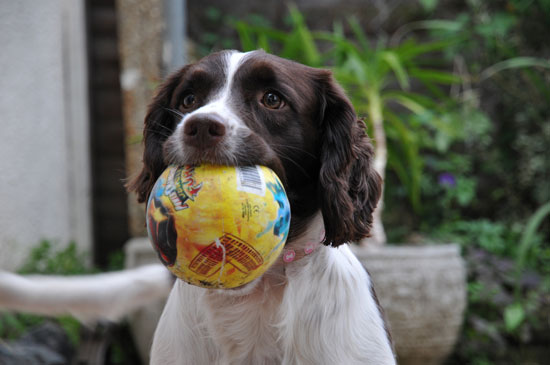 Picture of a Dog and a Ball