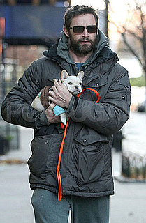 Pictures of Hugh Jackman Walking His New Puppy in Snowy NYC