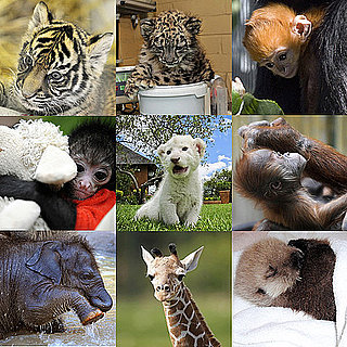 Zoo Babies Born in 2010