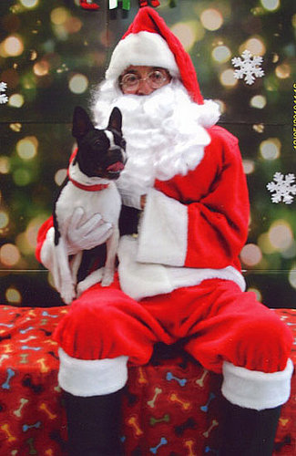 Dogs and Santa Claus