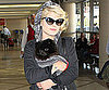 Slide Picture of Kelly Osbourne Arriving at LAX With Sid