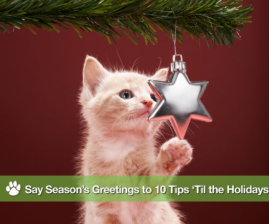 Say Season's Greetings to 10 Tips 'Til the Holidays
