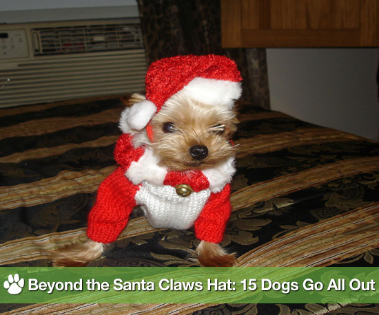 Beyond the Santa Claws Hat: 15 Dogs Go All Out