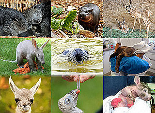 Odd Zoo Babies Born in 2010