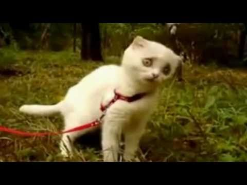 Dramatic Kitten Video