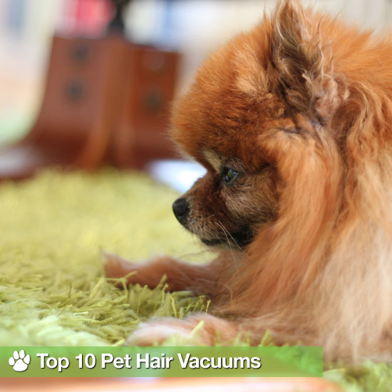 Top 10 Pet Hair Vacuums For Carpet and Hardwood