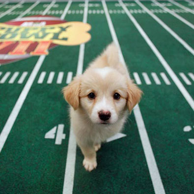 Information About Puppy Bowl VII