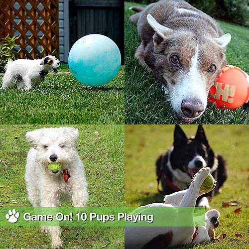Pictures of Dogs Playing Ball