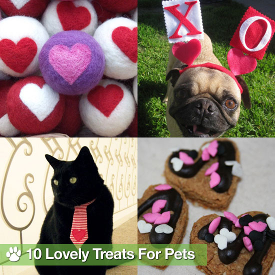 Valentine&#039;s Day Treats and Clothing For Pets