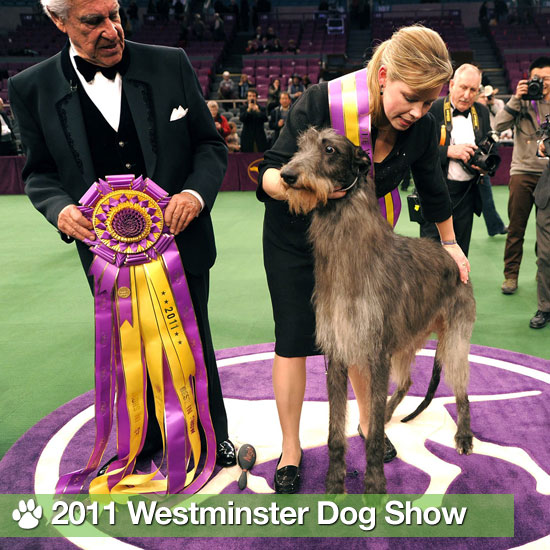 2011 Westminster Dog Show Winners and Behind-the-Scenes Pics