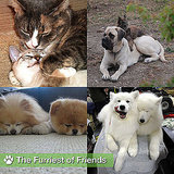 Pictures of Cute Dogs and Cats