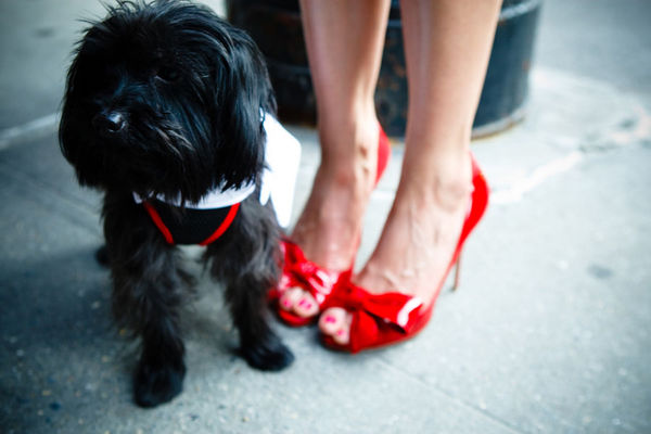 This couple's dog Milo was dressed to impress with a white tux and red bowtie.  Photo by 4Eyes Photography