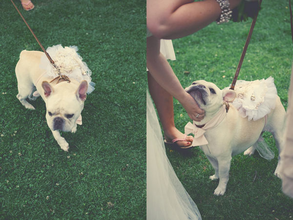 Aww . . . this couple had their dog Oliver serve as ring bearer with a custom-made bowtie and ring pillow.  Photo by Featherlove Photography