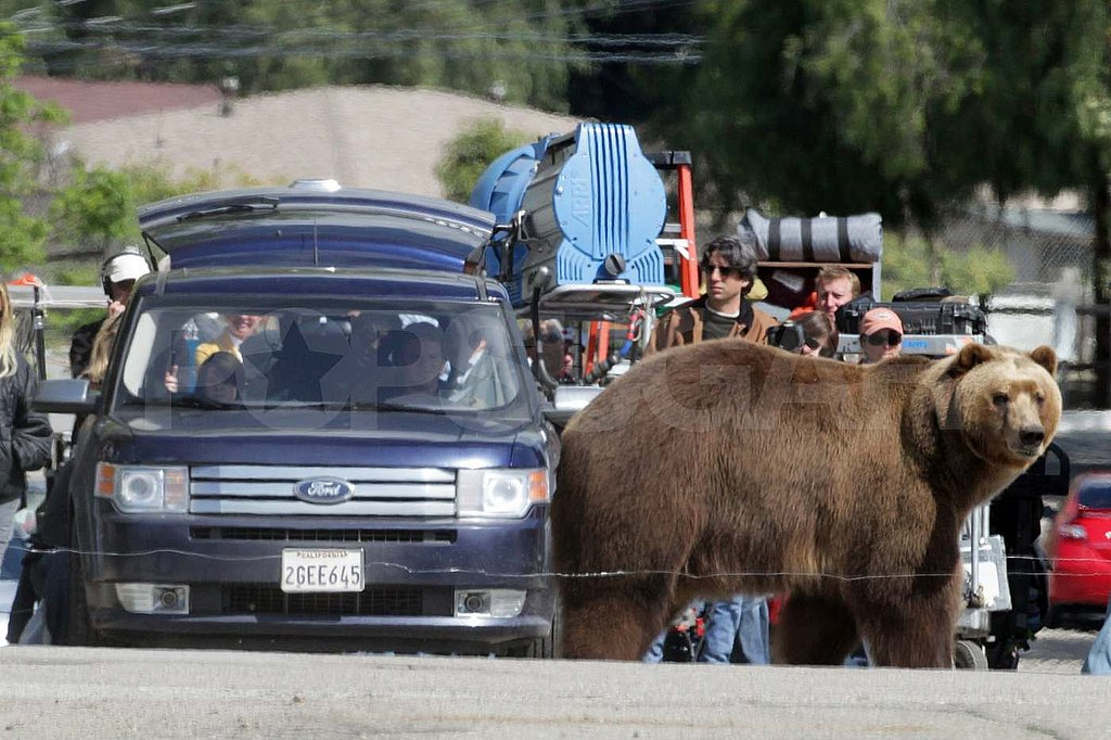 Matt Damon Shares a Scene With a Giant Grizzly Bear