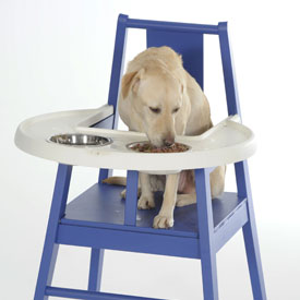 Doggie High Chair