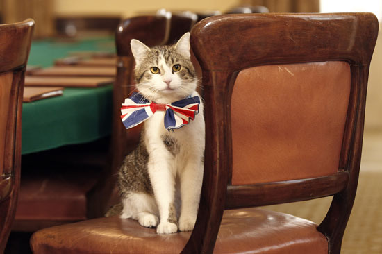 Larry the Downing Street Cat Preps For the Royal Wedding