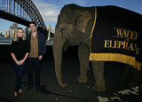 Robert Pattinson and Reese Greeted by Water and an Elephant in Sydney!