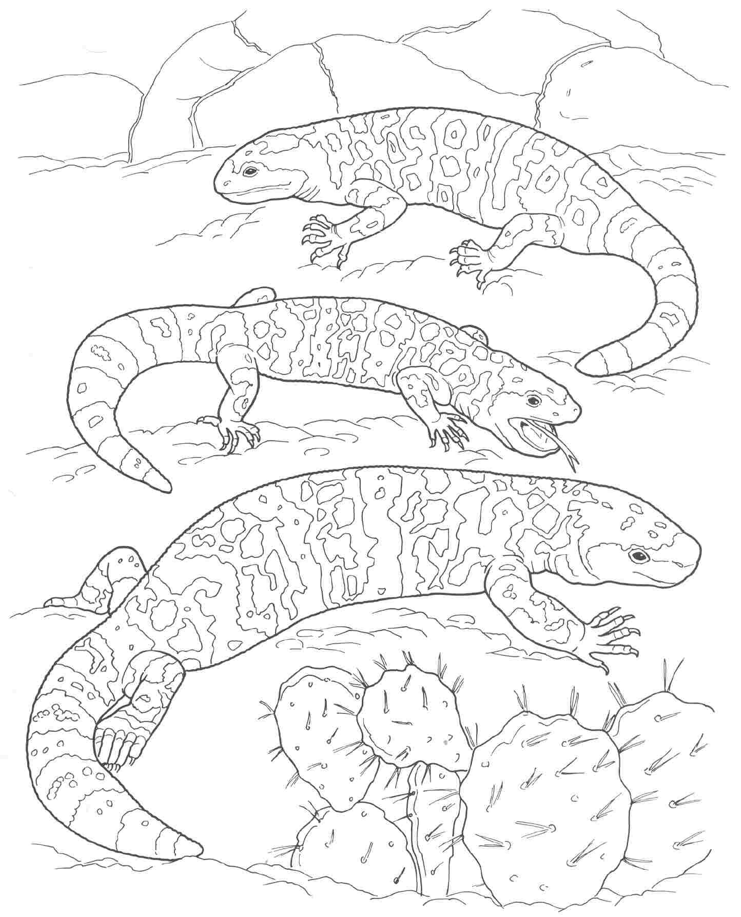 Coloring Worksheet Of Desert Plants Coloring Pages Desert Animals Coloring Pages