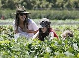 Rachel Bilson visited a farm with her little sisters Hattie and Rosemary.
